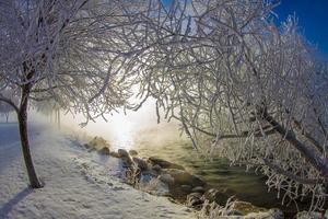 vegetatie: twee sneeuw bomen op winter veld bij zonsopgang