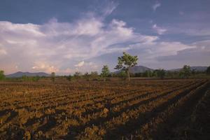 Aziatische landbouw foto