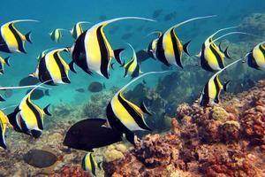 zee van geel en zwart foto