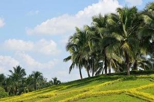kokospalmen onder de blauwe hemel foto