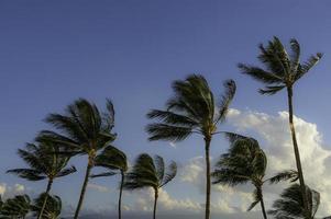 kona hawaï palmbomen foto