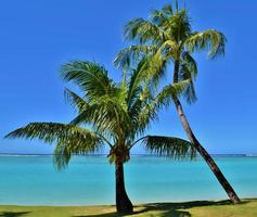 palmbomen op een tropisch paradijs foto