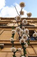 rozen in straten van Parijs foto