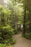mistige ochtend op de wilde Pacific Trail