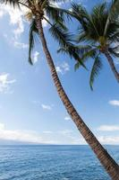VS - Hawaï - Maui, Lahaina foto