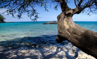 ijzerhout takken bereiken rotsen op strand 69 foto