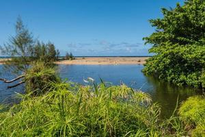 het strand en de vegetatie in Kauai, Hawaï foto