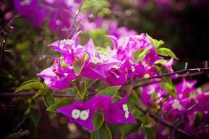 Aziatische bloem foto