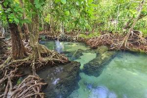 mangrovebomen in een turf moerasbossen foto