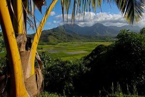 taro velden in Hanalei Valley, Kauai, Hawaï foto