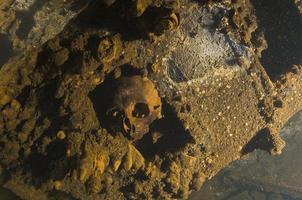 de schedel foto