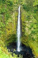akaka valt op het grote eiland Hawaï in tropische regenwouden foto