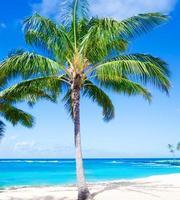 Kokospalm boom aan het zandstrand in Hawaï, Kauai foto