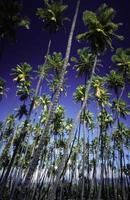 usa hawaii molokai, kapua'iwa kokospalm. foto