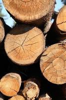 logs knippen