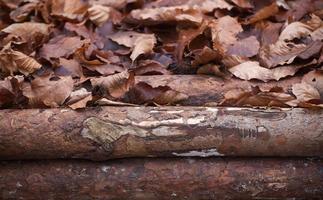bladeren en hout foto