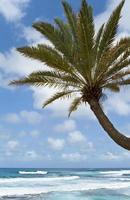 palmboom en turquoise oceaan foto