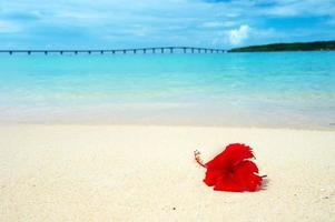hibiscus op tropisch strand