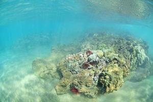 Wailea Reef