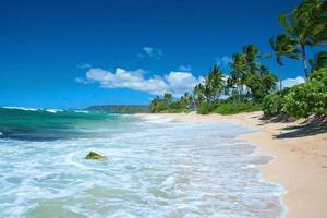 ongerept zandstrand met palmbomen en azuurblauwe oceaan foto