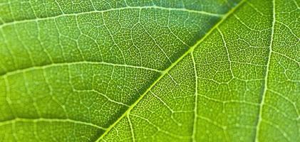 close up van een blad