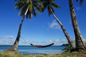 kleurrijke hangmat tussen palmbomen, ofu eiland, vavau groep, tot foto