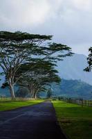 weg op kauai foto