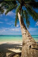palmboom op het zandstrand 05 foto