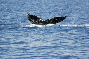 staart van walvis foto