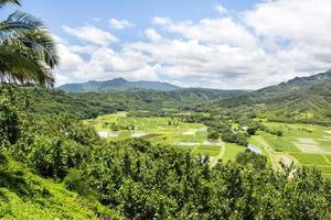 Hanalai Valley landbouwgewassen in Hawaï foto
