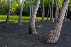 palmboom bosje foto