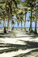 tropische schaduwen. foto