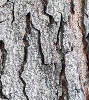 getextureerd hout foto