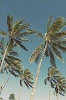 Hawaii maui strand palmbomen foto
