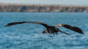 galapagos dieren foto