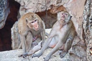 aap familie