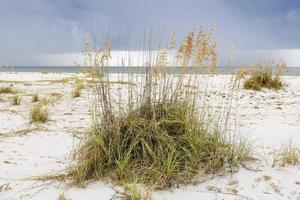 rode grassen op gasparilla eiland fl foto
