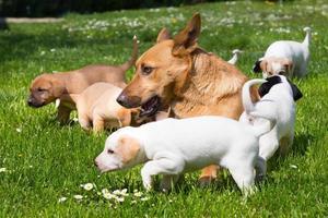 schattige kleine hondenfamilie van gemengd ras. foto