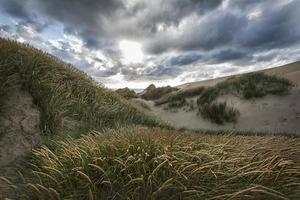 dag in de duinen