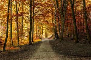 herfst vallen bos met traject foto