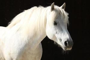 pferd, portret foto