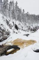 rivier stroomt in besneeuwde winter woud foto