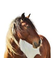 paard portret foto