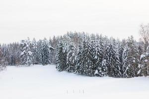 sneeuw bedekt bos en veld foto