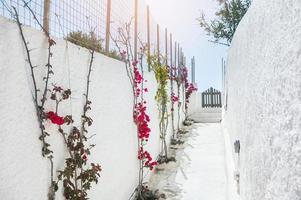 steegje met bloemen
