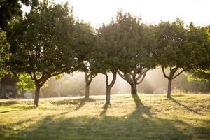 zonnige dag in het park foto