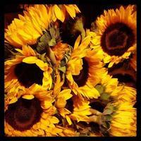zonnebloemen close-up foto