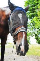 schattig paard portret foto