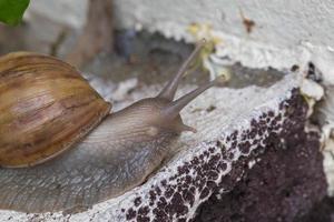 close-up slak