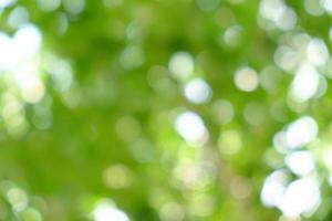 groene natuurlijke achtergrond van onscherpe bomen of bokeh foto